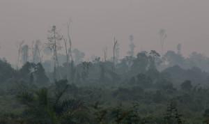 Sumatra – vypalování pralesů